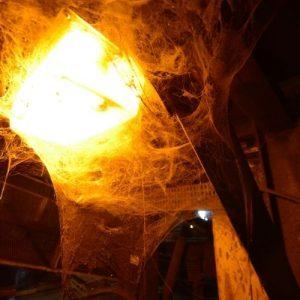 pók elleni permetezés